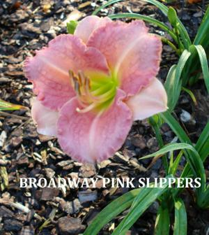 BROADWAY PINK SLIPPERS