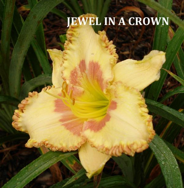 Jewel In A Crown