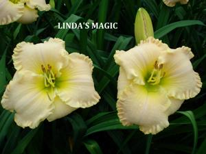 Linda's Magic