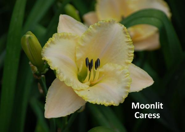 Moonlit Caress